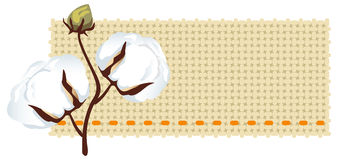 Cotton branch with fabric (Gossypium). Vector illustration Stock Images