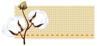 Cotton branch with fabric (Gossypium). Vector illustration Royalty Free Illustration