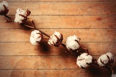 Cotton branch on wooden table. Above view royalty free stock photography