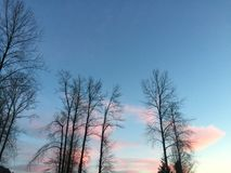 Cotton candy sky royalty free stock images