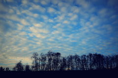 Cotton clouds Stock Photography