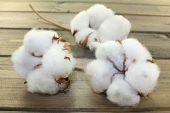 Cotton Royalty Free Stock Photography