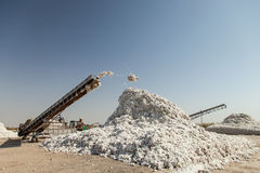 Cotton drying. Cotton harvest and drying. dry cotton stock images