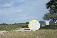 Cotton farming Florida USA Bales of raw cotton waiting collection in a field Royalty Free Stock Images