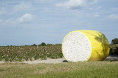 Cotton farming Florida USA Cotton field and large bale of raw cotton Stock Images