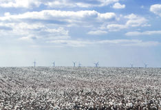 Cotton field. Located in the province of Cadiz, with Elctrica generating vanes at the bottom, it's a cloudy day Stock Photography