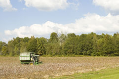 Cotton Field. Cotton picking machine in Mississippi Stock Photography