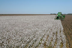 Cotton field Royalty Free Stock Photography