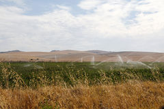 Cotton field being irrigated Royalty Free Stock Photography