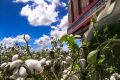 Cotton field. GOIAS, BRAZIL, April 14, 2004. A cotton field is being picked during the fall harvest Stock Images