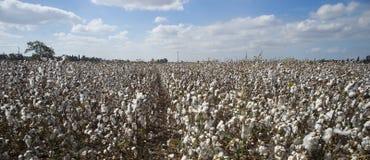 Cotton field Israel Stock Photos