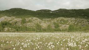 Cotton field in the Norway stock video footage