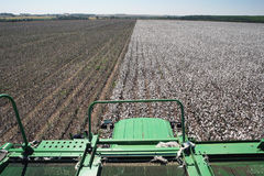 Cotton fields Stock Images