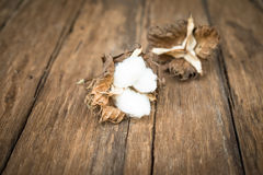 Cotton flowe. R on the wood table royalty free stock photos
