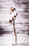 Cotton flower Stock Image