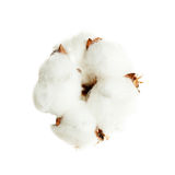 Cotton Flower Isolated on White Royalty Free Stock Photos