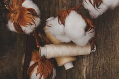 Cotton flower Royalty Free Stock Images