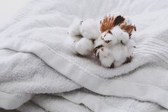 Cotton flower Royalty Free Stock Photos
