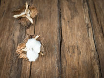 Cotton flower. On the wood table Stock Image