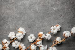 Cotton flowers on background. Cotton flowers on grey background Stock Image