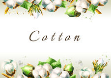 Cotton flowers background. Watercolor illustration royalty free illustration