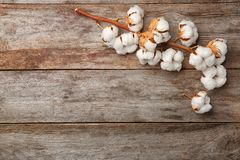 Cotton flowers on background. Cotton flowers on wooden background Stock Photography