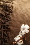 Cotton flowers on brown fabric scarf closeup. Minimal layout. Home-like concept stock images