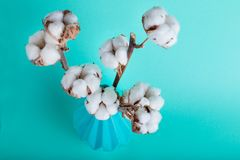 Cotton flowers close up. On turquoise background Royalty Free Stock Photography