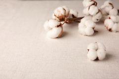 Cotton flowers on fabric,. Closeup Royalty Free Stock Photos