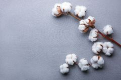 Cotton flowers on fabric. Top view Royalty Free Stock Photos