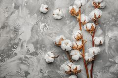 Cotton flowers on background. Cotton flowers on grey background Royalty Free Stock Images