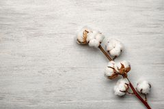 Cotton flowers on background. Cotton flowers on light background Stock Photography