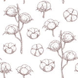 Cotton flowers seamless pattern. Vector illustration in sketch style Stock Photo