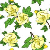 Cotton flowers seamless texture Royalty Free Stock Images