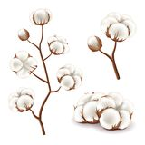 Cotton flowers vector set. Cotton flowers detailed photo realistic vector set stock illustration