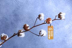 Free Cotton Flowers With Label Organic Concept On Grey Royalty Free Stock Image - 163904276