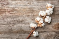 Cotton flowers on background. Cotton flowers on wooden background Stock Photos