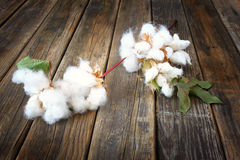 Cotton flowers on wooden rustic table background Royalty Free Stock Image