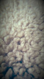 Cotton furry texture of a teddy bear Royalty Free Stock Image