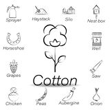cotton hand draw icon. Element of farming illustration icons. Signs and symbols can be used for web, logo, mobile app, UI, UX vector illustration