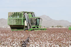 Cotton harvest. A cotton picker harvests a cotton field in Arizona Stock Photo