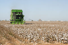 Cotton harvest. A cotton picker harvests cotton with a cotton gin in the background Royalty Free Stock Photos