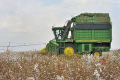 Cotton Harvest Stock Image