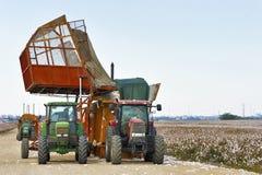 Cotton Harvest Stock Photos