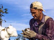 Cotton harvest Stock Images