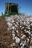 Cotton harvest Royalty Free Stock Images