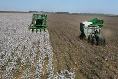 Cotton harvest Stock Images