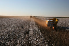 Cotton harvest Stock Photography