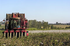 Cotton Harvest. SAO PAULO, BRAZIL, MAY 10, 2005. A cotton field is being picked during the fall harvest Stock Images