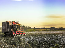 Cotton Harvest. SAO PAULO, BRAZIL, MAY 10, 2005. A cotton field is being picked during the fall harvest Stock Photos